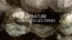 Vidéo La nature sous toutes ses formes (Les mathématiques dans la nature)